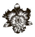floral element orchid flower silhouette isoleted vector image vector image