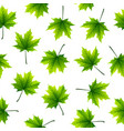 green maple leaves isolated on white background vector image
