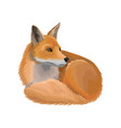 red lying fox wild northern forest animal vector image