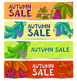 grape banners vector image
