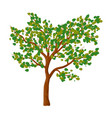 green tree isolated symbol icon design vector image vector image