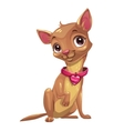 Little cute sitting chihuahua puppy vector image