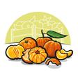 mandarines vector image vector image