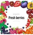 background with garden berries vector image