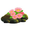 pink flowers and rocks on white background vector image vector image