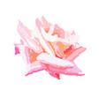 pink rosebud watercolor design element hand drawn vector image vector image