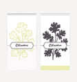 cilantro in outline and silhouette style vector image vector image