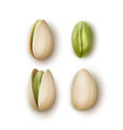 set of pistachio nuts vector image vector image