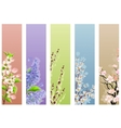 collection of floral banners vector image vector image