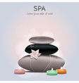 colorful of spa with flower candles and sto vector image