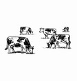 cows graze in meadow sketch style vector image