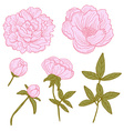 hand drawn peonies set vector image vector image