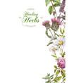 herbal banner vector image vector image