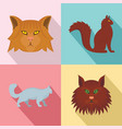 maine coon cat profile icons set flat style vector image vector image