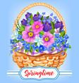 springtime garden flowers in basket vector image