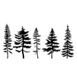 a set pines and spruces on white background vector image