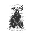 grizzly bear in the forest vector image vector image