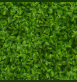 seamless green leaves pattern spring or summer vector image