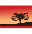 Silhouettes of single trees with red background vector image