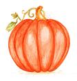 Watercolor orange pumpkin vector image vector image