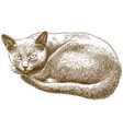 engraving antique cat vector image