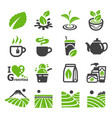 greentea icon vector image vector image