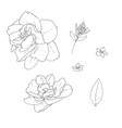 stock line botanic flowers vector image vector image
