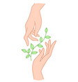 two hands hold floral plant with leaves vector image vector image