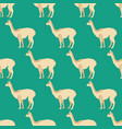 vicuna seamless pattern vector image