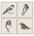 graphic set of hand drawn birds on grey vector image vector image