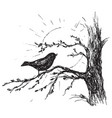 sketch bird sings on tree vector image vector image