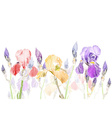Art Pastel Background with a Row of Iris Flowers vector image vector image