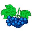 dark blue berry vector image vector image