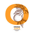 orange label drawing citrus fruit engraved vector image vector image