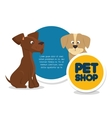 pet shop template and dog cat vector image vector image