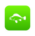 rose fish sebastes norvegicus icon digital green vector image vector image