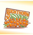 sea buckthorn branch vector image