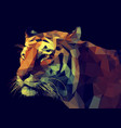 low poly tiger vector image vector image