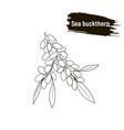 outline berry sea buckthorn sketch vector image vector image