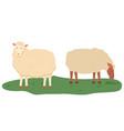 sheep on pasture animals livestock farming vector image vector image