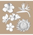 Tropical flowers - hibiscus protea plumeria vector image vector image