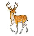 elegant sika deer vector image vector image