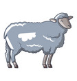 old sheep icon cartoon style vector image