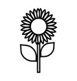 sunflower nature delicate decoration icon thick vector image