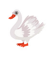 beautiful swan bird on a white vector image vector image