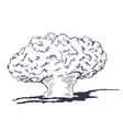 mushroom cloud from the atomic bombing vector image