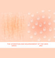 nutrition and hydration of the skin vector image vector image