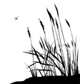 Reeds and dragonfly vector image vector image