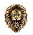 sketchy graphic color portrait a roaring lion o vector image vector image