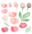 watercolor loose red and pink peony flower bloom vector image vector image